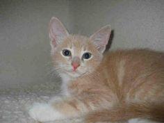 Cats & Kittens | RABBIT  petprojectfoundation.org