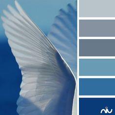 blue feathers (fauna)