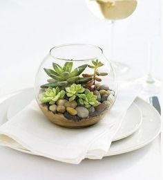 ideas about Mini Terrarium Terrarium, Marimo