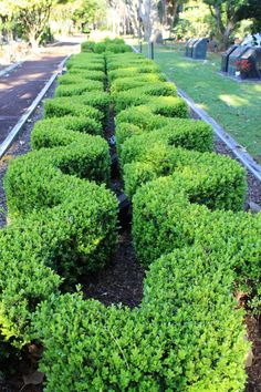 City of Ryde Spring Garden Competition 2013 - entered by Northern Suburbs Memorial Gardens. #Garden #Gardens #Gardening #GreenThumb #Spring #Hedge #Flora  #Shrubs #Ryde #CityofRyde