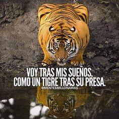 22 Mejores Imágenes De Tigre Motivacion Frases Frases
