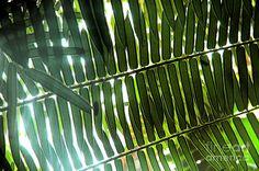 Image from http://images.fineartamerica.com/images-medium-large/jungle-light-johanne-peale.jpg.