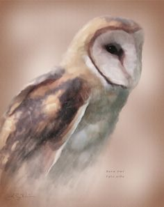 Barn+Owl+Illustration+Wildlife+Art+Print+by+JPuzWilson+on+Etsy,+$10.00