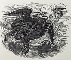 Illustrated by Charles Tunnicliffe from the illustrated edition first issued in 1953.