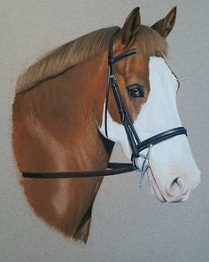 """""""Mi piace"""": 24, commenti: 1 - Lindsay Hill (@lindsay_hill_artist) su Instagram: """"Done for Christmas.  #equineartist #equinepportraits #artist #horses #pony 🐴🎨"""""""