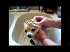 How to Kill Fleas on Dog. How to Clean Anal Glands. Tapeworms, Natural Essential Oils