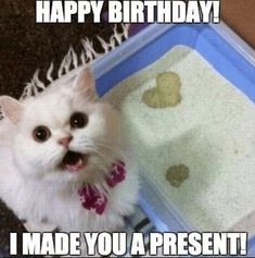 Cat birthday meme 17 funny cute angry memes collection for friends family Memes Humor, Funny Animal Memes, Cute Funny Animals, Funny Animal Pictures, Funny Cute, Funny Memes, Animal Pics, Funniest Animals, Hilarious