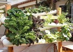 Hydroponics vertical garden