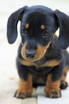 One day he will be mine and his name will be Lincoln (Lincolnshire sausage)