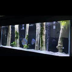 Decoration just by using a set of standing logs😌 More plants, YES or NO❓🤔  . . . #aquadecor #diskusfish #aquarium #3dbackground #aquascape #aquascapes #aquascaping Saltwater Fish Tanks, Saltwater Aquarium, Aquarium Fish Tank, Freshwater Aquarium, Reef Aquarium, Marine Fish Tanks, Marine Aquarium, Fish Aquarium Decorations, Aquarium Ideas