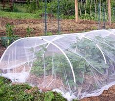 Using row cover and sewing row cover in the organic vegetable garden, text and photos by Barbara Pleasant