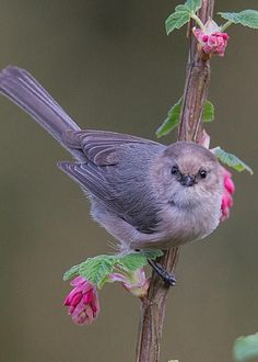 """""""This flowered branch is MINE, ALL MINE!!"""""""