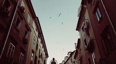 Rijeka, Croatia  Seagulls over Korzo
