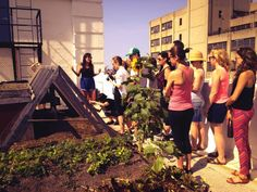 Sign up for a guided tour of Brooklyn Grange's rooftop farm at the Brooklyn  Navy Yard! Spots are limited, and tours leave promptly from Building 92 at  10am and 11:30am.