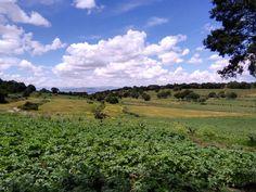Skyline Vineyard, Skyline, Landscape, Outdoor, Outdoors, Scenery, Vine Yard, Vineyard Vines, Outdoor Games