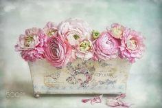 lovely springtime by Lizzy  Pe  on 500px