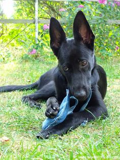 Make a cute DIY octopus dog toy with jeans pockets! Diy Candle Wick, Beeswax Candles, Diy Dog Toys, Old Jeans, Recycled Denim, Sewing Toys, Pet Dogs, Pets, Heirloom Sewing