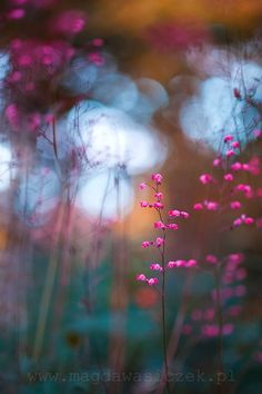 A flower, garden, plants and floral art photography by international garden photographer of the year Magda Wasiczek Wild Flowers, Beautiful Flowers, Bokeh Photography, Artistic Photography, Foto Poster, Jolie Photo, Pretty Pictures, Beautiful World, Flower Power
