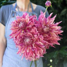 We are a family run flower farm specializing in growing unique, uncommon and heirloom flowers. Types Of Flowers, Cut Flowers, Pink Flowers, Garden Bulbs, Garden Plants, Summer Plants, Zinnias, Dahlias, Hydrangeas