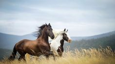 40+ Beautiful Horse HD Wallpaper | Horse 3D Photo | HD Wallpapers ...