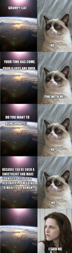 Grumpy cat is secretly Kristen Stewart. Hehehe