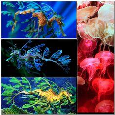 Sea creatures collage 6