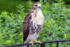 Items similar to Digital Desktop Wallpaper - Eagle - Nature Photography - Wallpaper JPG on Etsy Bald Eagle, Nature Photography, Desktop, Bird, Digital, Wallpaper, Animals, Vintage, Animales