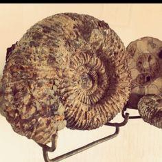 Grandma's fossils