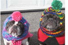 Frenchies in hats