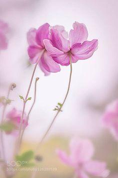 for more wallpapers http://ift.tt/1WArfgQ and http://ift.tt/1WGbQM8 flowerflowersmacropinkprettysoft light
