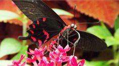 Natural Wonders, Nature, Naturaleza, Nature Illustration, Outdoors, Natural