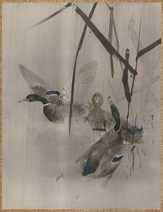 Ducks in the Rushes  Watanabe Seitei  (Japanese, 1851–1918)  Period: Meiji period (1868–1912) Culture: Japan Medium: Album leaf; ink and color on silk Dimensions: 14 x 10 3/4 in. (35.6 x 27.3 cm) Classification: Painting