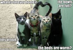 Every cat should know the happiness of a forever home ... as should every human!!