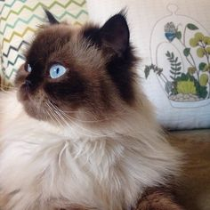 Jesi's kitty Digby poses like a supermodel in front of our Decor on Display Pillow! #meowmonday
