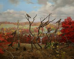 passenger pigeon diorama at the American Museum of Natural History in New York City - Google Search