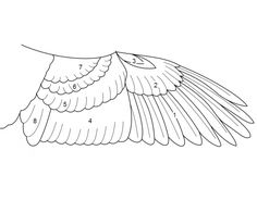 основные признаки класса птицы в картинках: 11 тыс изображений найдено в Яндекс.Картинках
