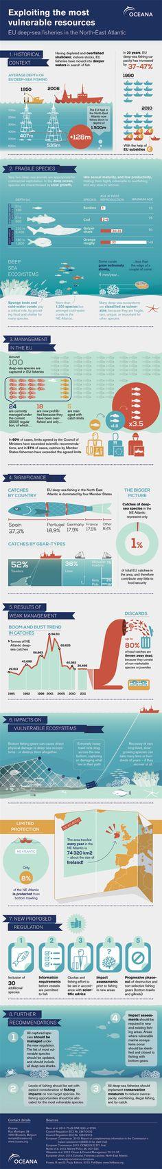 [해외 사례] 심해 생태계를 위협하는 것에 관한 인포그래픽