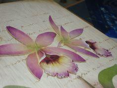 Aula Mayumi Takushi - Orquídea -