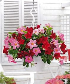 Balcony Hanging potted jasmine seeds Rare Mixed color flower seeds beautiful plant seeds amazing smell for room Hanging Flower Baskets, Hanging Pots, Flower Planters, Flower Pots, Tropical Flowers, Summer Flowers, Love Flowers, Beautiful Flowers, Growing Flowers