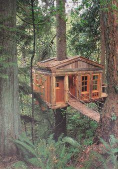 Quiero una casa del árbol en el bosque
