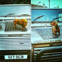 9 Months Old #bestdogever #adventuredog #LandRoverDefender #v8mate #gooddaysandgreatdays by birtles5 9 Months Old #bestdogever #adventuredog #LandRoverDefender #v8mate #gooddaysandgreatdays