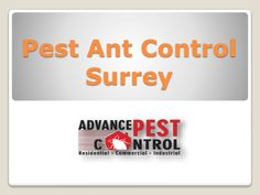 Ant control can be quite hectic for homeowners. Pharaoh ants, for example, can be very difficult to control and eliminate.  http://www.slideshare.net/JesiKa3/pest-ant-control-surrey