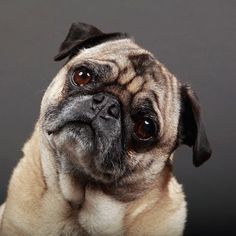 Your Dog Really <i>Can</i> Tell Whether You're Happy or Sad