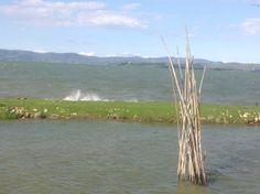 Tuulinen päivä, Lago Trasimeno, Umbria, Italia