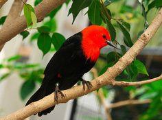 Mi Uruguay: Aves Uruguayas: El Federal