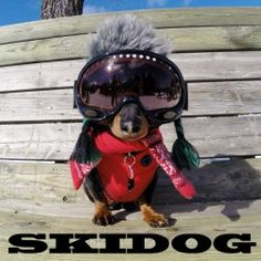 "Presenting, ""SKIDOG"", the Video"