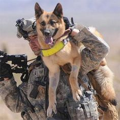 Soldier Dogs: The Four-Legged Heroes Of Iraq And Afghanistan Air Force Technical Sergeant Adam Miller carries his dog, Tina to Military Working Dogs, Military Dogs, Police Dogs, Military Police, Military Service, Army, War Dogs, Service Dogs, German Shepherds