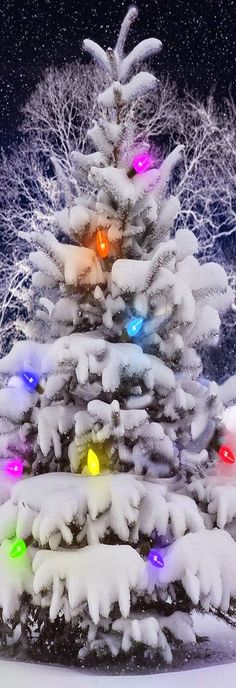 4 unique Christmas Tree With Lighting