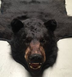 Recent Prepared Skin Of A Black Bear. It Is A Skin Of A Larger Be
