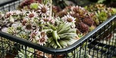 Quelles plantes choisir pour un balcon l'hiver?